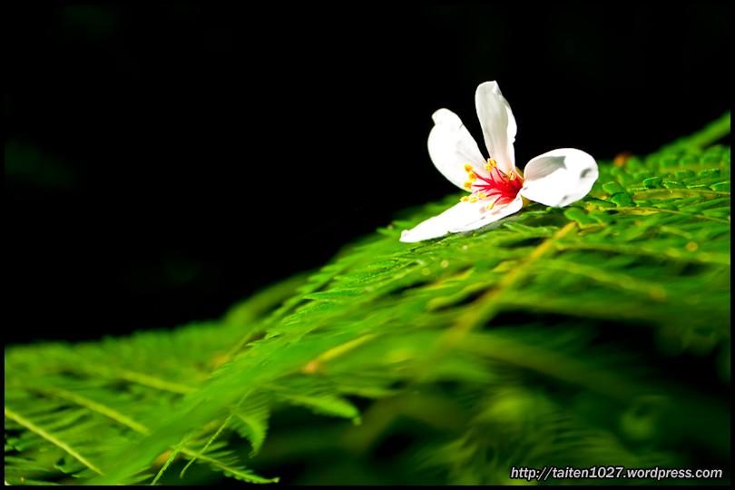 微距植物-016.jpg (810×540)