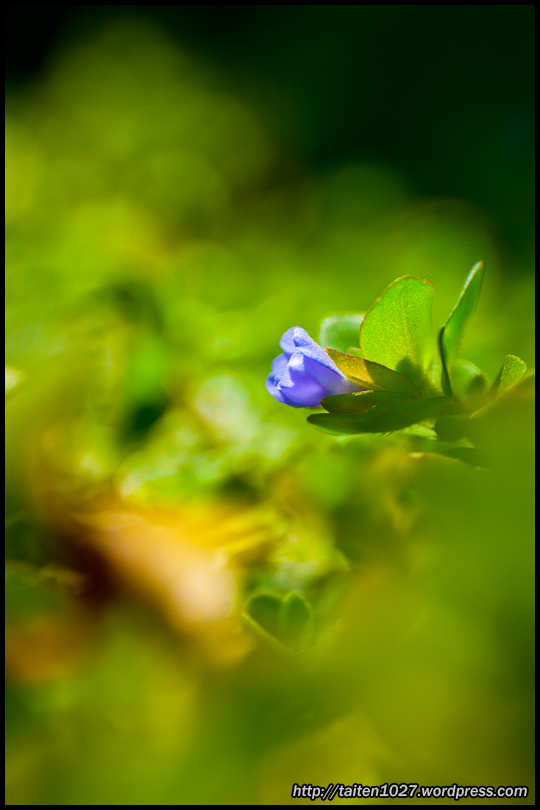 微距植物-010.jpg (540×810)