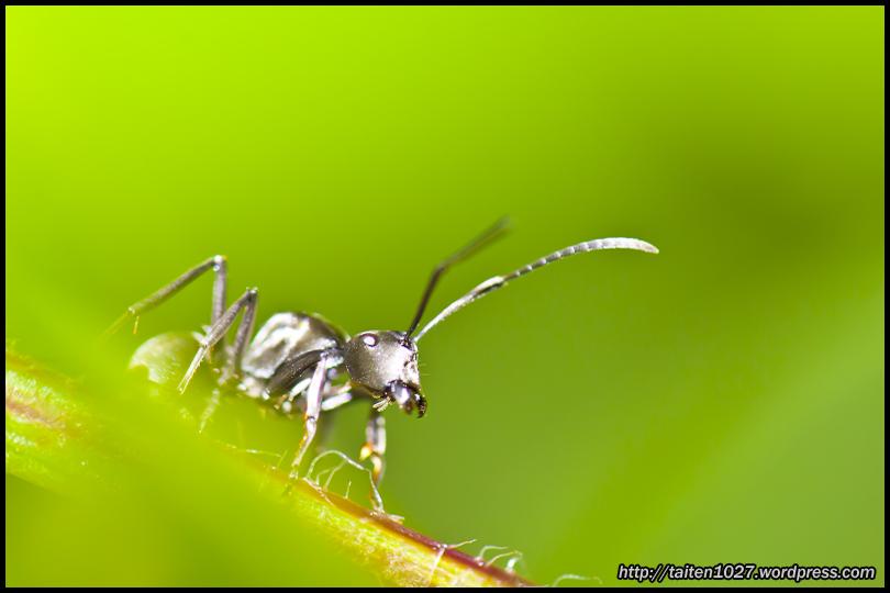 微距昆蟲-009.jpg (810×540)