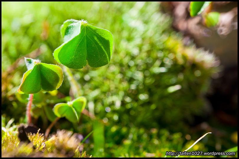 微距植物-009.jpg (810×540)
