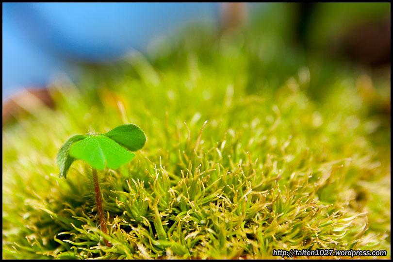 微距植物-006.jpg (810×540)