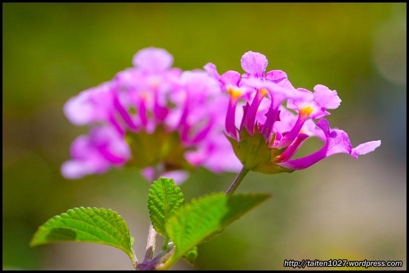 微距植物-008.jpg (810×540)