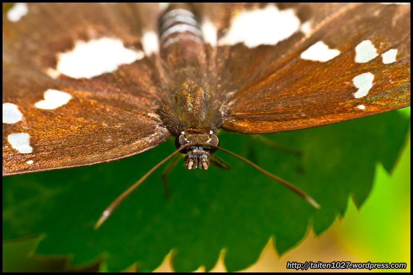 微距昆蟲-016.jpg (810×540)