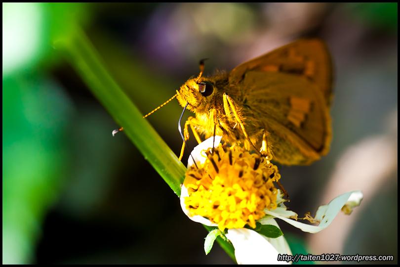 微距昆蟲-019.jpg (810×540)