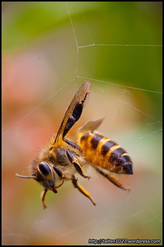 微距昆蟲-005.jpg (540×810)