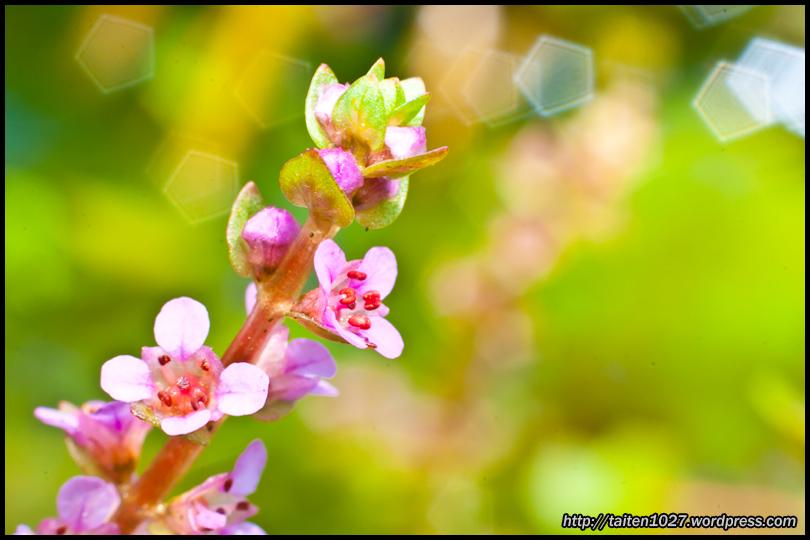 微距植物-021.jpg (810×540)