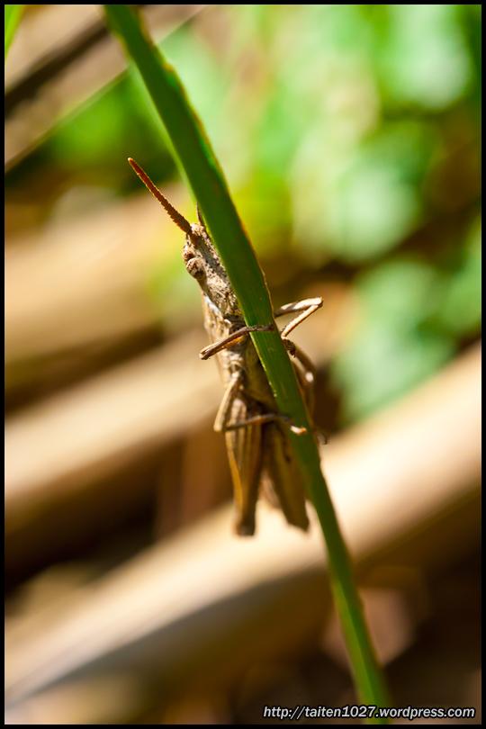 微距昆蟲-017.jpg (540×810)
