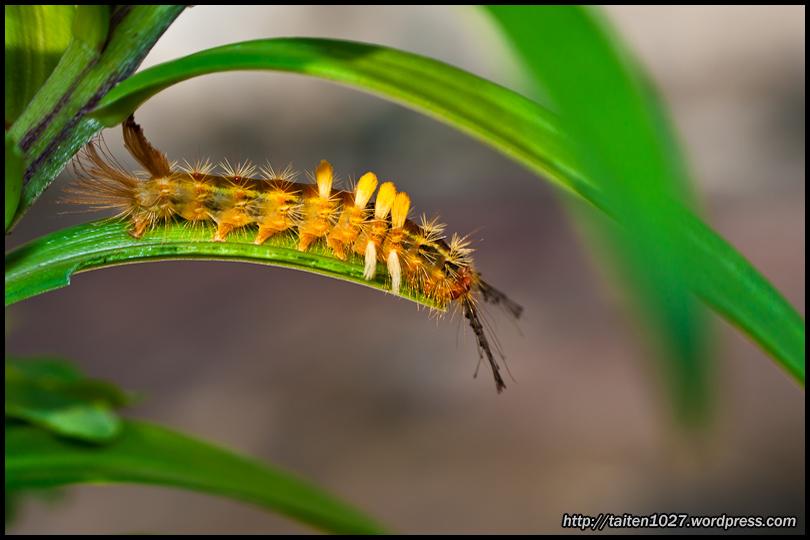 微距昆蟲-018.jpg (810×540)