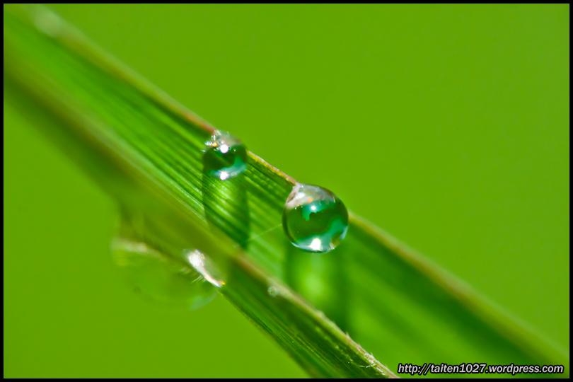 微距植物-019.jpg (810×540)