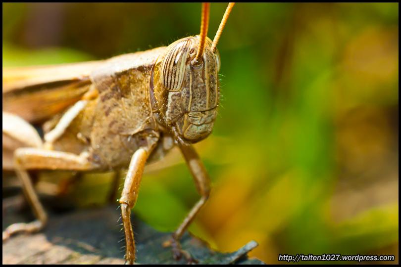 微距昆蟲-020.jpg (810×540)